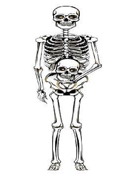 colgante de esqueleto pared 105 cms